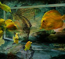 Curiosity by Pamela Phelps