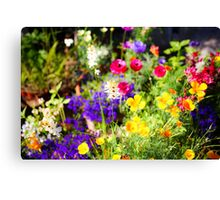 flowering garden. Yellow and purple blooming flowers Canvas Print