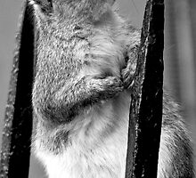 Cheeky Brooklyn Squirrel by Catherine White Photography