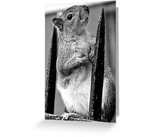 Cheeky Brooklyn Squirrel Greeting Card