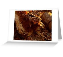 Red Log, Red Sunset Greeting Card