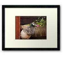 Peacock-a-boo Framed Print