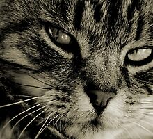 LE CHAT I by Leny .