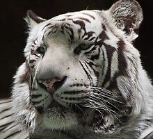 White Tiger by Ray Chiarello