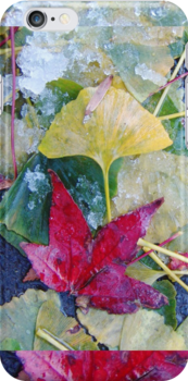 Ginko & Maple by Julie Shackson