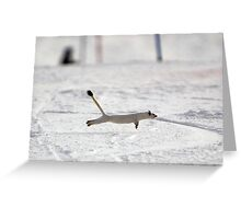 Snow Weasel Greeting Card