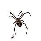 Big Spider Little Spider by Jane McDougall