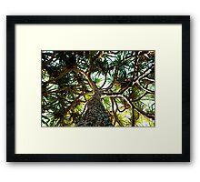 Pandanus Framed Print