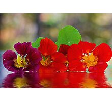 Three Nasturtiums Photographic Print