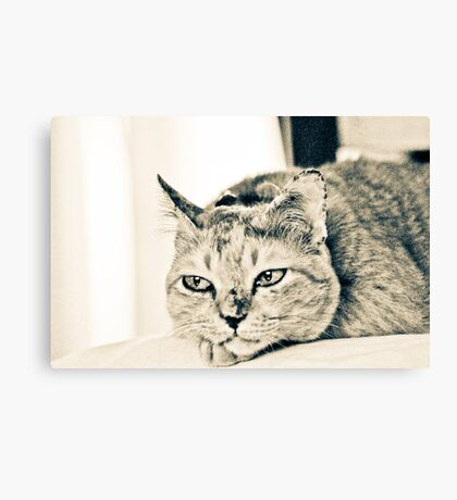 Badly miss you mommy~~~m..e..o..w..Got 2 Featured Works Canvas Print