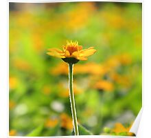 Yellow spring flower and surrounding yellow Poster