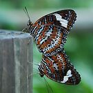Mating Butterflies by Alihogg