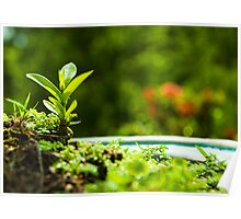 Green nature strongly - new life Poster