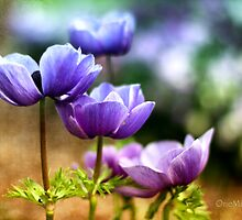 Anemones by Marian Moore