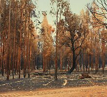 After the Fire by Elaine Teague