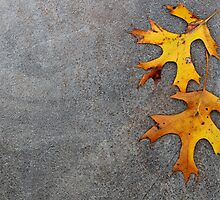 Oak leaves on stone background. by Dipali S
