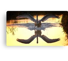 Swan reflect in the water Canvas Print