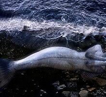 Fish Man by Massimo Serzio
