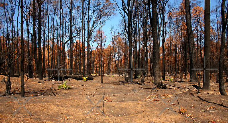 After the Fire - Regeneration by Elaine Teague