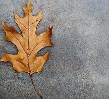 An Oak leaf by Dipali S
