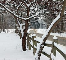 Don't Fence Me In by Grinch/R. Pross