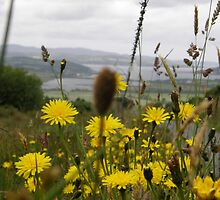 Flora - Burt Co. Donegal Ireland by mikequigley