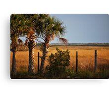 Palm Tree On Coast Canvas Print
