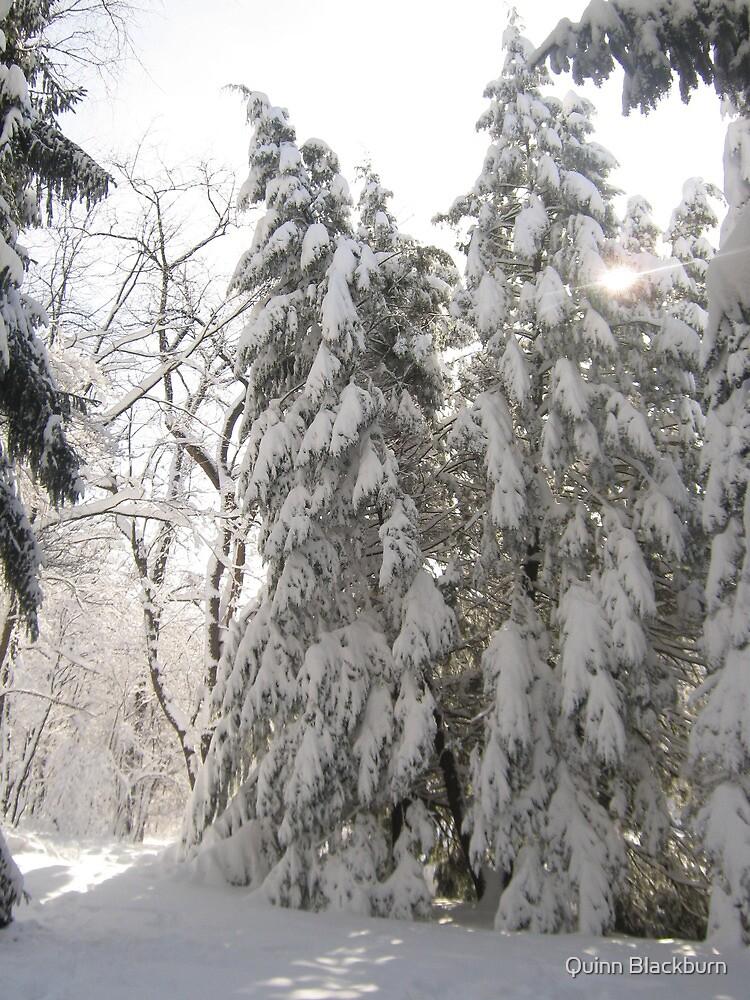 Dreaming Wisdom in Winter's Womb by Quinn Blackburn
