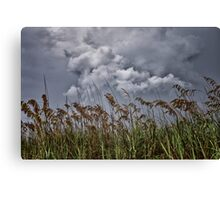 Sea Oats and Storm Clouds Canvas Print