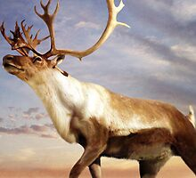 Majestic Caribou Wandering his Domain by Norman Rawn