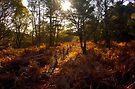 Dunwich Heath Forest Scene Suffolk by Darren Burroughs