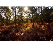 Dunwich Heath Forest Scene Suffolk Photographic Print