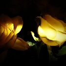 yellow rose light by mikequigley
