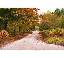 Autumn Colours Photographic Print