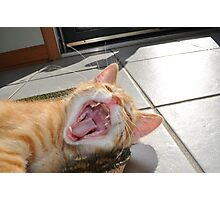 Just One Cat Treat Please! Photographic Print