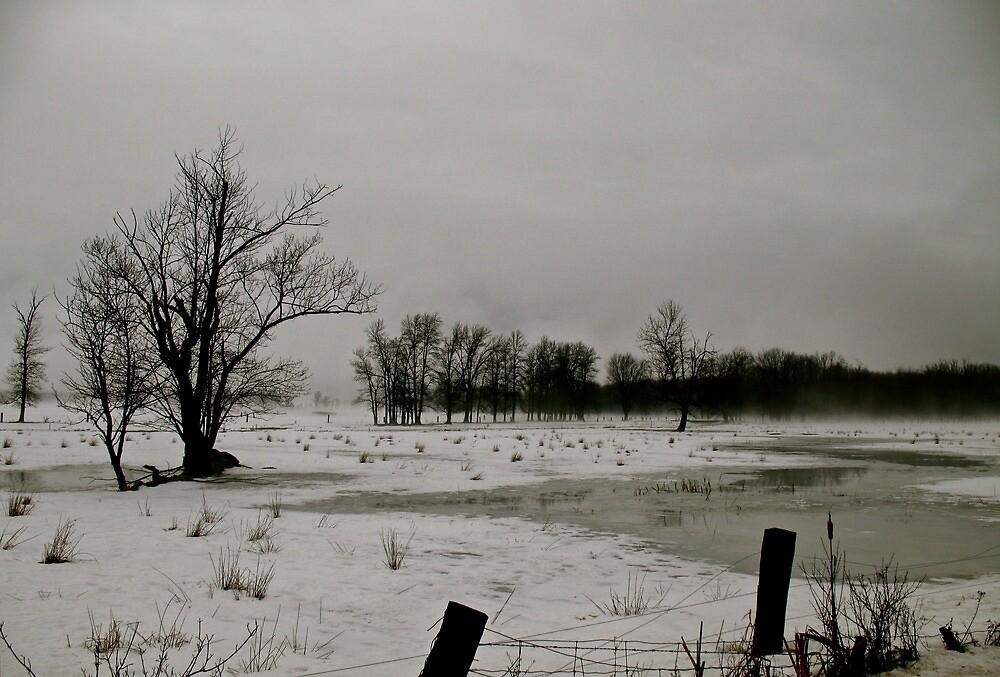 Winter Hues by Jessica Bradford