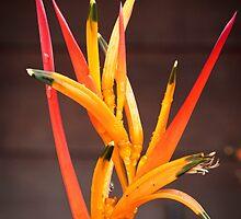 Costa Rican Beauty by Robert Kelch, M.D.