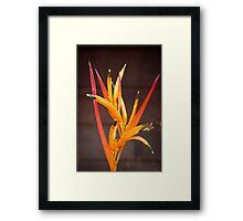 Costa Rican Beauty Framed Print