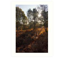 Dunwich Heath Woodland Scene Art Print