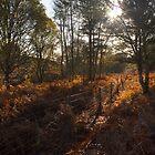 Dunwich Heath Woodland Scene by Darren Burroughs