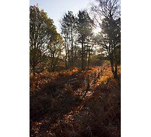 Dunwich Heath Woodland Scene Photographic Print