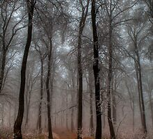 Frosty Path by Béla Török
