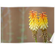 Fiery flower Poster