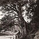 Giant Tree by Linda Jackson