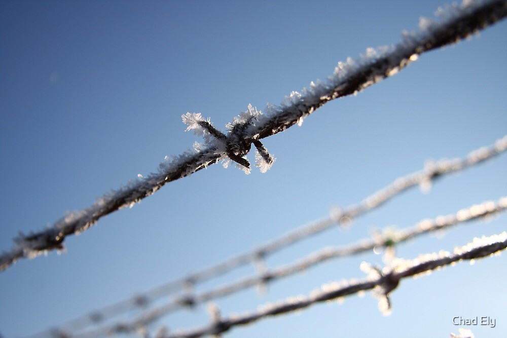 Frost On Barbed Wire by Chad Ely
