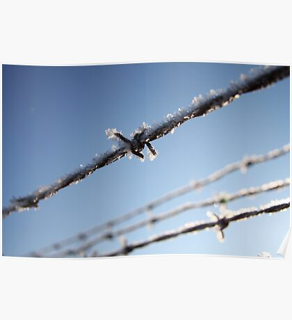 Frost On Barbed Wire Poster