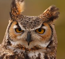 Great horned owl by Brian Healy Photography
