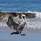 Smooth Landing by Kathy Baccari