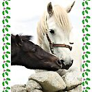 Connemara Pony Chistmas Card by ConnemaraPony