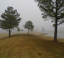 Ricelands' Fog by WildestArt